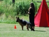 German Shepherds Puppies 27