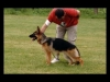 German Shepherds Puppies 6